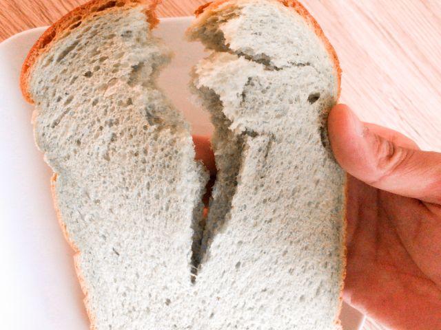 よもぎ食パンをちぎる